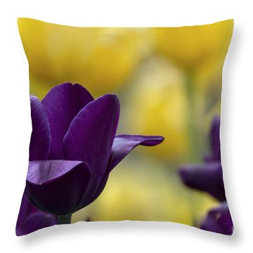Dutchman's Beauty 2 Throw Pillow