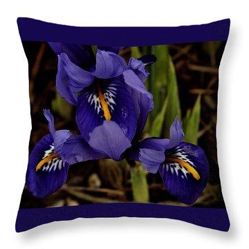Dwarf Iris 2016 Throw Pillow