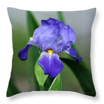 Dwarf Iris 9834_2 Throw Pillow