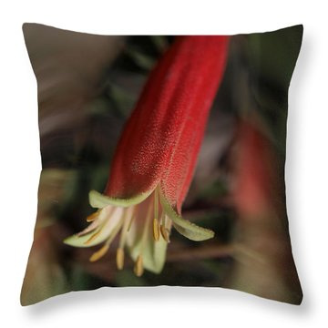 Dynamic Correa Throw Pillow