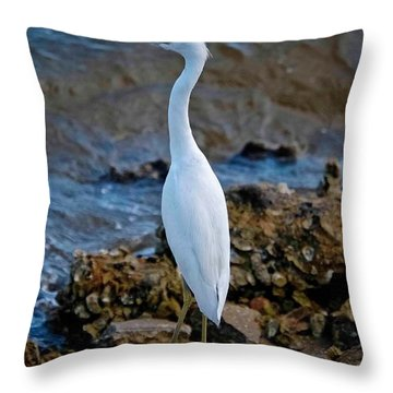 Eager Egret Throw Pillow by DigiArt Diaries by Vicky B Fuller