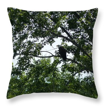 Eagle At Codorus Throw Pillow by Donald C Morgan
