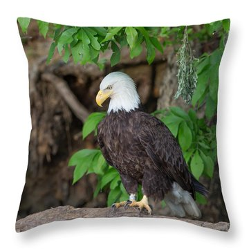 Eagle Closeup Throw Pillow