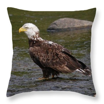 Throw Pillow featuring the photograph Eagle Deep In Thought by Debbie Stahre