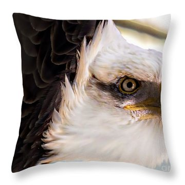 Eagle Eye Throw Pillow by Sherman Perry