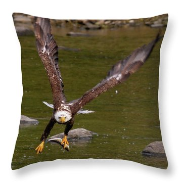 Throw Pillow featuring the photograph Eagle Fying With Fish by Debbie Stahre
