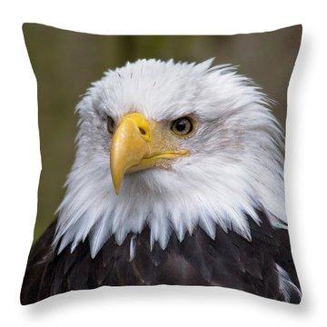 Eagle In Ketchikan Alaska Throw Pillow