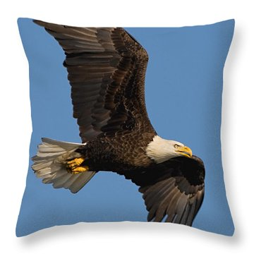 Eagle In Sunlight Throw Pillow