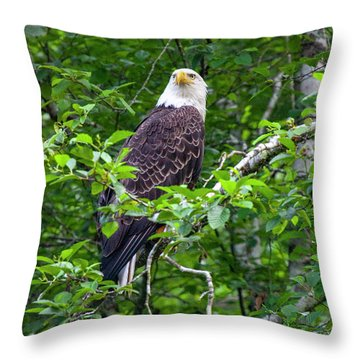Eagle In Tree Throw Pillow