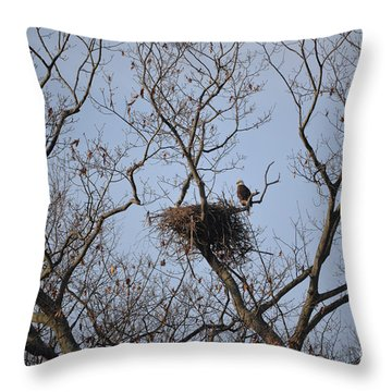 Eagle Nest Throw Pillow