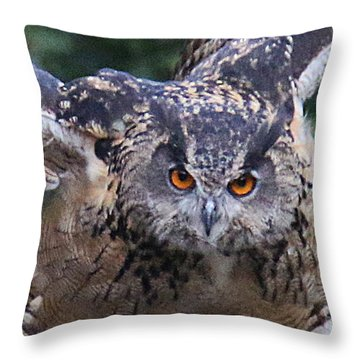 Eagle Owl Close Up Throw Pillow