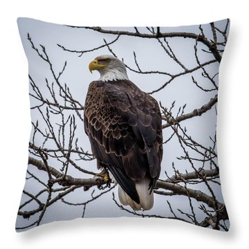 Throw Pillow featuring the photograph Eagle Perched by Paul Freidlund