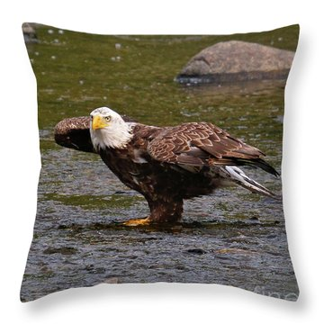 Throw Pillow featuring the photograph Eagle Prepares For Take-off by Debbie Stahre