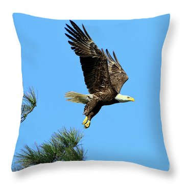 Throw Pillow featuring the photograph Eagle Series 1 2017 by Deborah Benoit