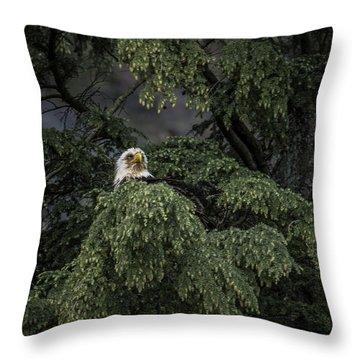 Eagle Tree Throw Pillow by Timothy Latta