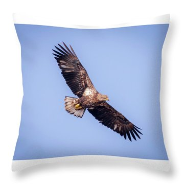 Throw Pillow featuring the photograph Eagle Watch 2018 - Third Year Bald Eagle  by Ricky L Jones