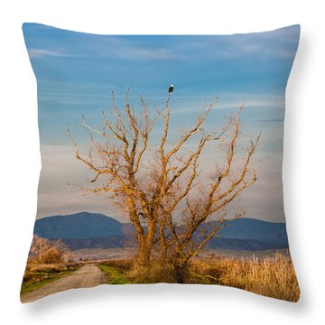 Eagle Watch Throw Pillow