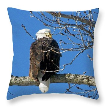 Eagle Watch Throw Pillow by Sue Stefanowicz