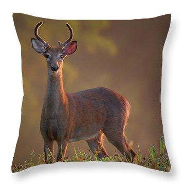 Early Buck Throw Pillow