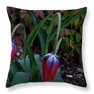 Early Morning Nodding Tulips Throw Pillow