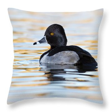 Throw Pillow featuring the photograph Early Morning Ringneck by Bryan Keil