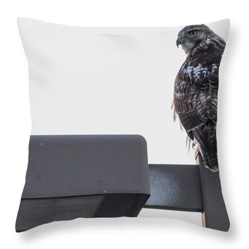 Throw Pillow featuring the photograph Early Morning Sentinel   by Ricky L Jones