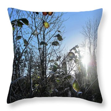 Throw Pillow featuring the photograph Early Morning Sun by Andy Walsh