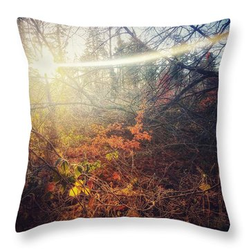 Early Morning Winter Sun Throw Pillow