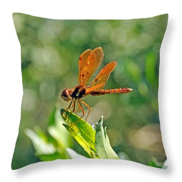 Eastern Amber Wing Dragonfly Throw Pillow by Kenneth Albin