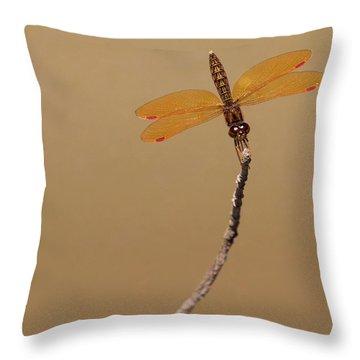 Eastern Amberwing Throw Pillow