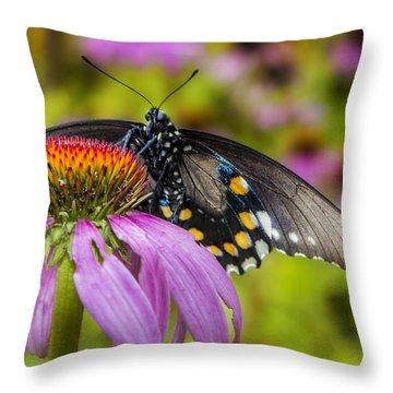 Throw Pillow featuring the photograph Eastern Black Swallowtail Butterfly by Ken Barrett