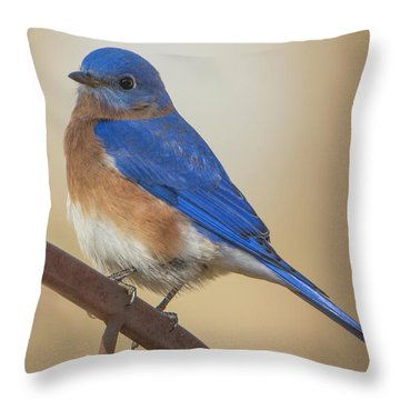 Throw Pillow featuring the photograph Eastern Blue Bird Male by David Waldrop