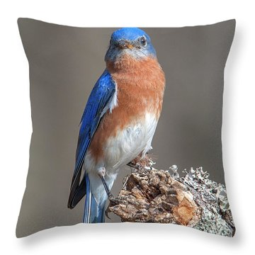 Eastern Bluebird Dsb0300 Throw Pillow