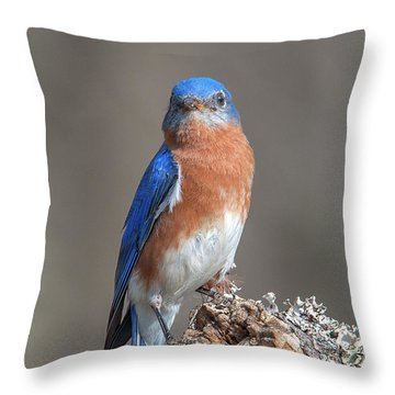 Eastern Bluebird Dsb0300 Throw Pillow