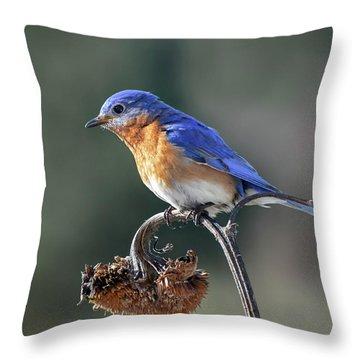 Eastern Bluebird In Spring Throw Pillow