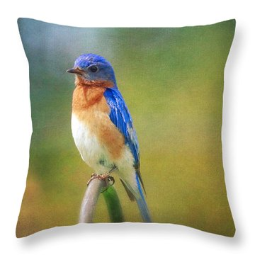 Throw Pillow featuring the photograph Eastern Bluebird Painted Effect by Heidi Hermes
