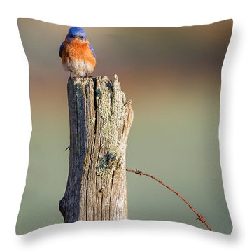Throw Pillow featuring the photograph Eastern Bluebird Portrait by Bill Wakeley