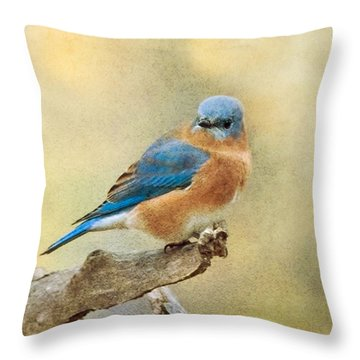 Eastern Bluebird Texture Throw Pillow