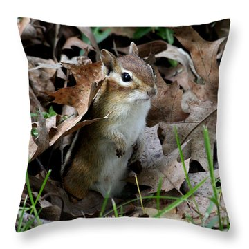 Eastern Chipmunk Throw Pillow