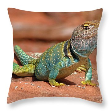 Eastern Collared Lizard Throw Pillow