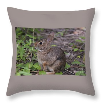 Eastern Cottontail 20120624_11a Throw Pillow by Tina Hopkins