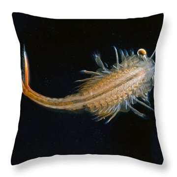 Eastern Fairy Shrimp Easterbrook Forest Throw Pillow