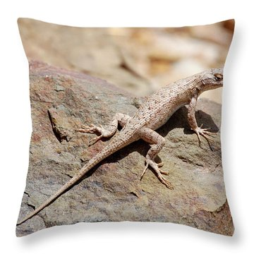 Eastern Fence Lizard, Sceloporus Undulatus Throw Pillow