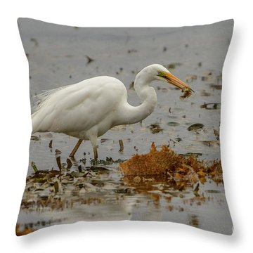 Eastern Great Egret 10 Throw Pillow