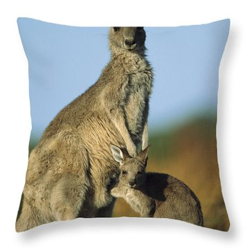 Eastern Grey Kangaroo And Her Joey Throw Pillow by Ingo Arndt