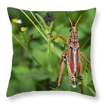 Eastern Lubber Grasshopper  Throw Pillow