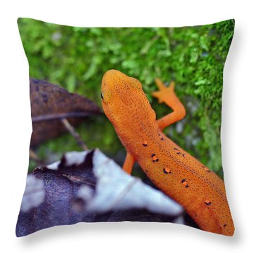 Eastern Newt Throw Pillow by David Rucker