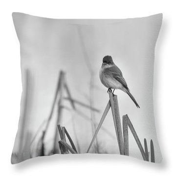 Throw Pillow featuring the photograph Eastern Phoebe 2017 by Thomas Young