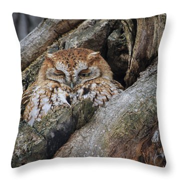 Eastern Screech Owl 2 Throw Pillow by Gary Hall
