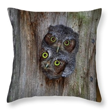 Eastern Screech Owl Chicks Throw Pillow